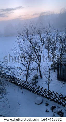 Nature Pic with snow and trees