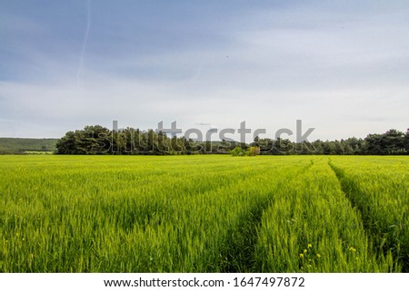 A corn field in spring with beatiful light, Path in field HDR stock photo #1647497872