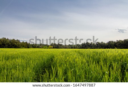 A corn field in spring with beatiful light, Path in field HDR stock photo #1647497887