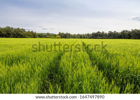 A corn field in spring with beatiful light, Path in field HDR stock photo #1647497890