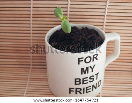An original gift for a friend. sprout of a sunflower in a mug with the inscription for my best friend