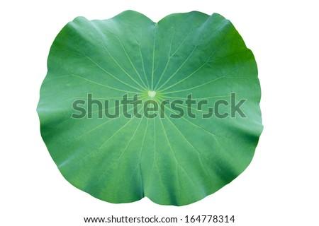 Lotus leaf. isolate on white background. #164778314