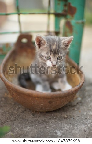 Portrait of a cute little kitty outdoors. Domestic lovely cat. Charming playfull baby animal. Cat play in a rusty bowl #1647879658