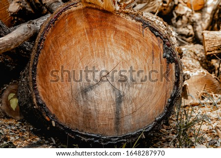 Pile of wood that is cut on the ground (Pile of wood, Pile of wood in the backyard), Piled tree, Poplar and log yard. #1648287970