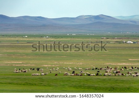 Yurts and herd of sheep and goats grazing on the meadow field on the mountains background, Mongolia landscape. #1648357024