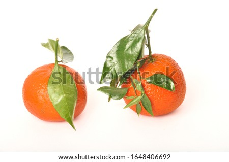 Portuguese clementine on white background #1648406692