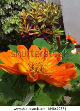 beautiful rose in the public garden of Ceará #1648697371