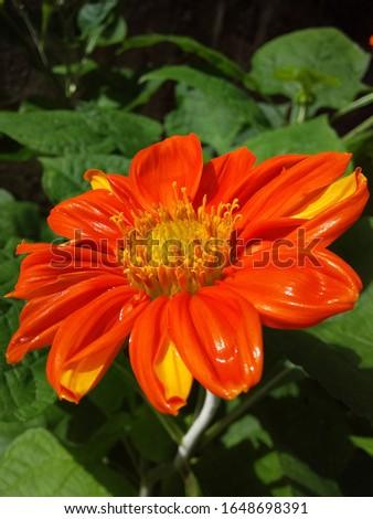a beautiful rose in the public garden of Ceará #1648698391