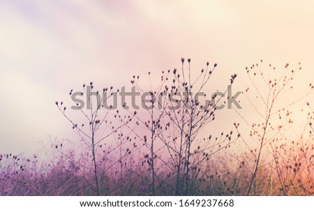 Soft purple and orange toned photo of dried wild flowers in a meadow