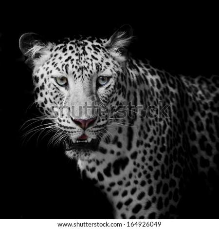 Leopard portrait #164926049