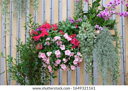Hanging flower pots adorn the walls in the garden, helping to look beautiful and fresh. #1649321161