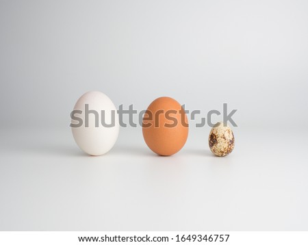 3 types of eggs concept on a white background: duck egg, chicken egg, quail egg. Placed in front to show different color and size characteristics. #1649346757