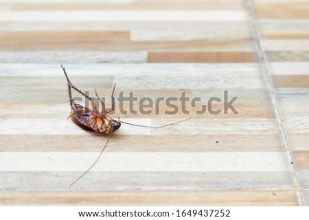 one creepy cockroach dead on floor with insecticide killing #1649437252