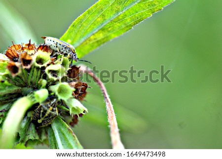 A picture of a small insect perched on a small flower along the way.