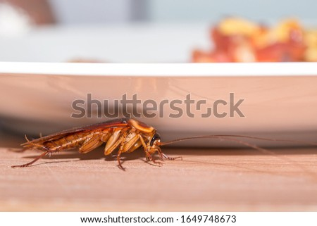 The problem in the house because of cockroaches living in the kitchen. Cockroaches hiding under a plate of food. Cockroaches are carriers of the disease.