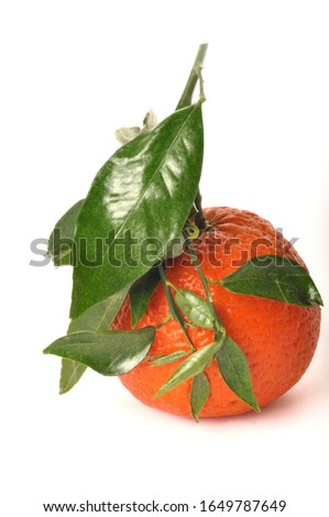 Portuguese clementine on white background #1649787649