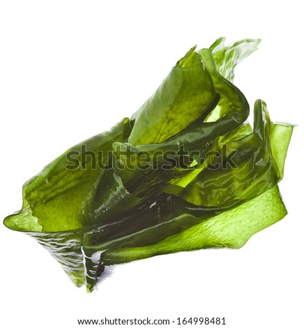 seaweed kelp ( laminaria ) wet heap pile close up isolated on white background #164998481