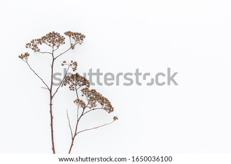 Minimal style photography. Dry Flowers , natural creative composition top view background with copy space for your text. Flat lay.