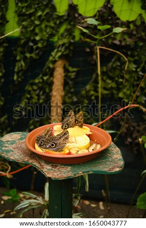 A vertical picture of a plate full of fruits with owl butterflies on them surrounded by greenery