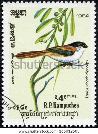 CAMBODIA - CIRCA 1984: stamp printed by Cambodia, shows bird(lanius schach nigriceps), circa 1984 #165012503