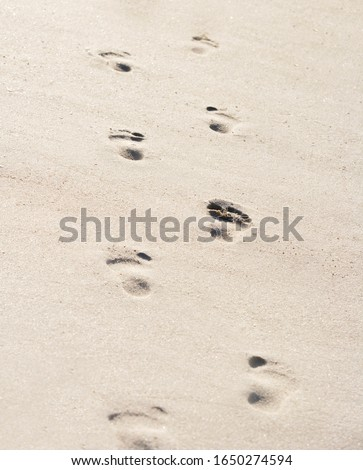 Footsteps in sand on a sunny day #1650274594