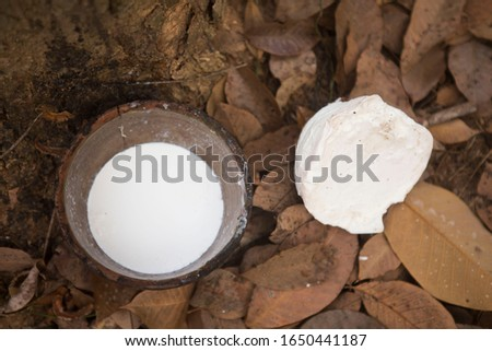 foggy rubber plantations with rubber bowl #1650441187