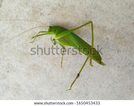 Grasshopper and cement ground pictures