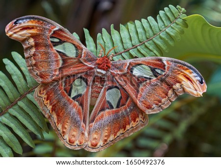 A rare species of butterfly. Giant butterfly. Butterfly Park. Bali. Indonesia. Asia