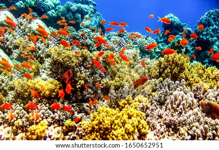 Underwater coral fish shoal view #1650652951