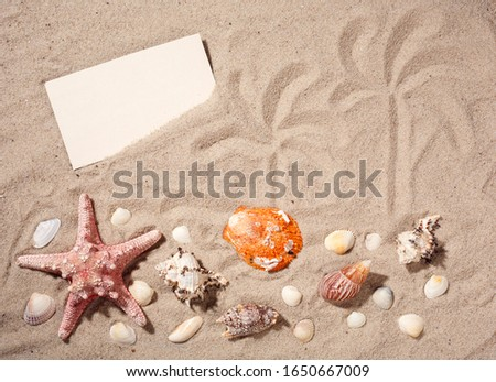 Beach wallpaper sand and shells. Summer background with starfish. Holiday card with copy space. Picture of palm trees on sand.