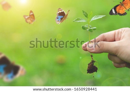 closeup of woman hands holding sprout on earth day.Environment conservation and energy saving concept.