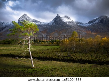 Lonely tree in front of majestic mountains #1651004536