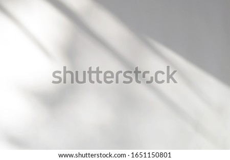 Tropical leaves natural shadow overlay on white texture background, for overlay on product presentation, backdrop and mockup, summer seasonal concept Royalty-Free Stock Photo #1651150801