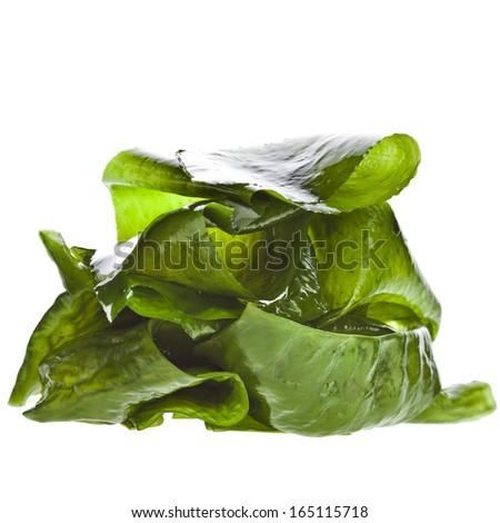 seaweed kelp ( laminaria ) wet heap pile close up macro isolated on white background #165115718