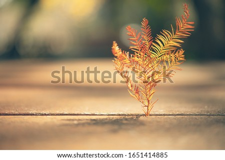 close-up of leaves (of bald cypress) standing upright in a gap of wooden table with back light from the sun. #1651414885