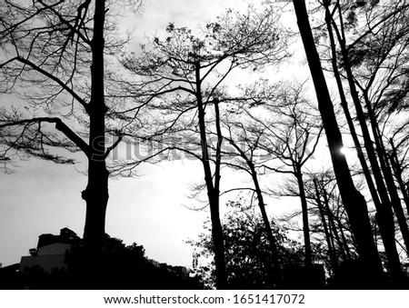 Image of dry winter branches of fallen leaf tree, shot from bottom to sky at noon. Dry winter tree branch background to sky background texture (black and white photo) #1651417072