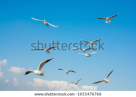 Seagull flying in sky. Seagull flying sky as freedom concept #1651476766