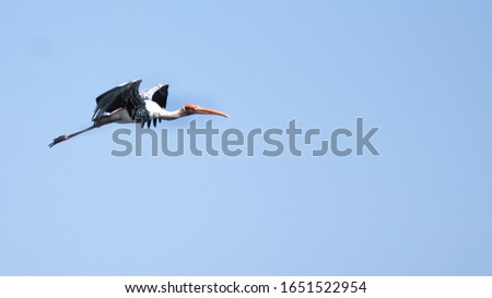 Painted Stork flying in the blue sky #1651522954