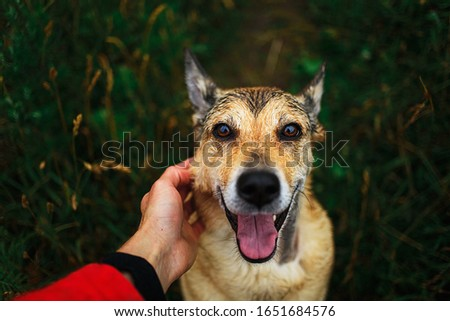 From above happy faithful dog with tongue out sitting on green grass and looking at camera while crop owner caring and stroking pet #1651684576
