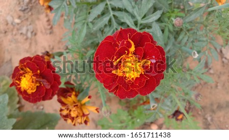 Browse through dozens of  flower images. Find beautiful pics of roses, tulips and a lot more. You can use them for personal and commercial use.