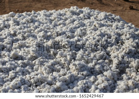 Close up outdoor view of part of a cotton pile in the countryside in Benin, West Africa. Pattern of white harvested flowers lighted by the sun. Soft natural plant. Abstract textured picture.