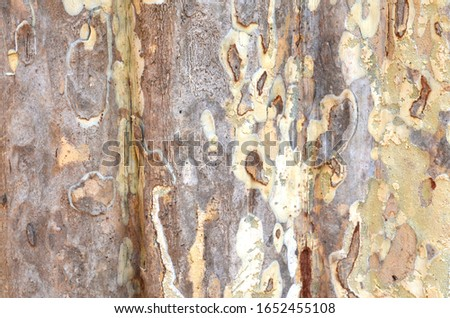 Dry tree bark texture background  #1652455108
