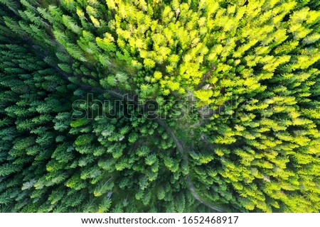 Country country road in the forest. Aerial view of evergreen trees, texture of the top of the tree. Beautiful green spruce forest from top to bottom drone. Forest, pines aerial view Royalty-Free Stock Photo #1652468917