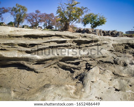 """Miraculous fossils left behind by an explosion of an estimated 1.8 million years ago. A river surrounded by fossils. The name of the miracle river is """"ASAKAWA"""". Valuable fossils are metasequoia trees. #1652486449"""