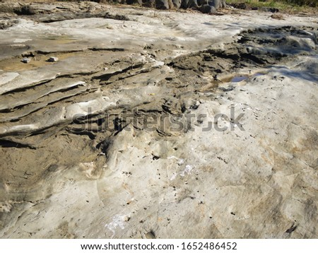 """Miraculous fossils left behind by an explosion of an estimated 1.8 million years ago. A river surrounded by fossils. The name of the miracle river is """"ASAKAWA"""". Valuable fossils are metasequoia trees. #1652486452"""