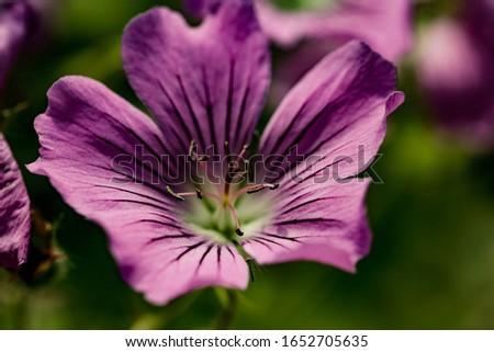 flower macro violet macro plant #1652705635