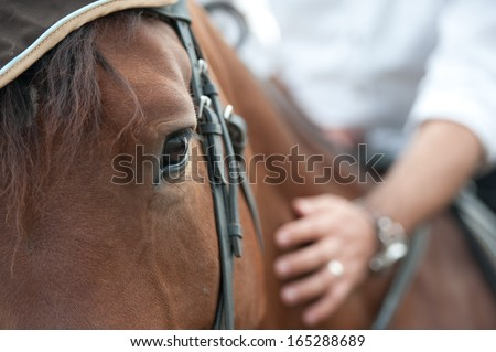 closeup of a horse head with detail on the eye and on rider hand. harnessed horse being lead - close up details.  a stallion horse being riding. A picture of an equestrian on a brown  horse in motion