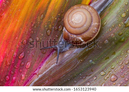 Small brown snail on green leaf,Snail crawling on leaf,Abstract drops of water on flower leaf,Africa, Thailand, Animal, Animal Shell, Animal Wildlife #1653123940