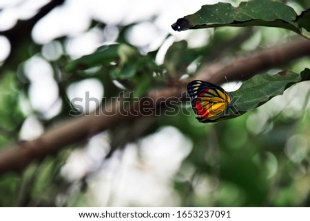 Flying butterfly. Colorful butterfly on leaves or leaf background. With beautiful butterfly in natural forest. nature panoramic view. Spring, Summer, landscape. close-up macro picture of a butterfly.