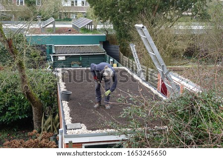 The making of a rooftop garden #1653245650